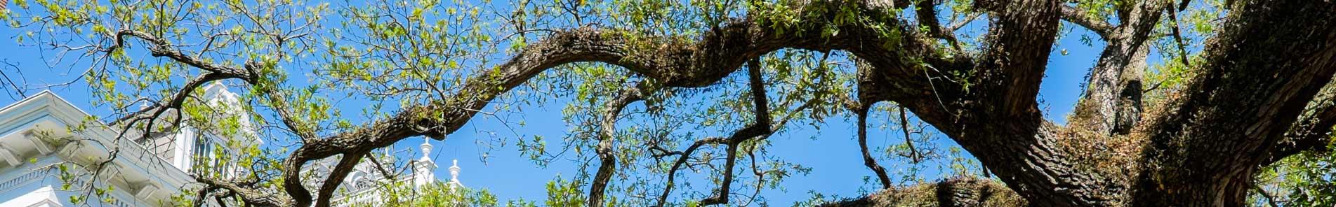 c-slide-tree2