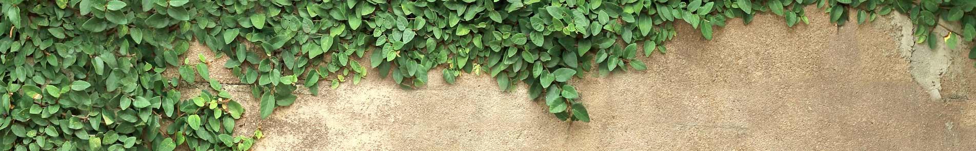 c-slide-wall